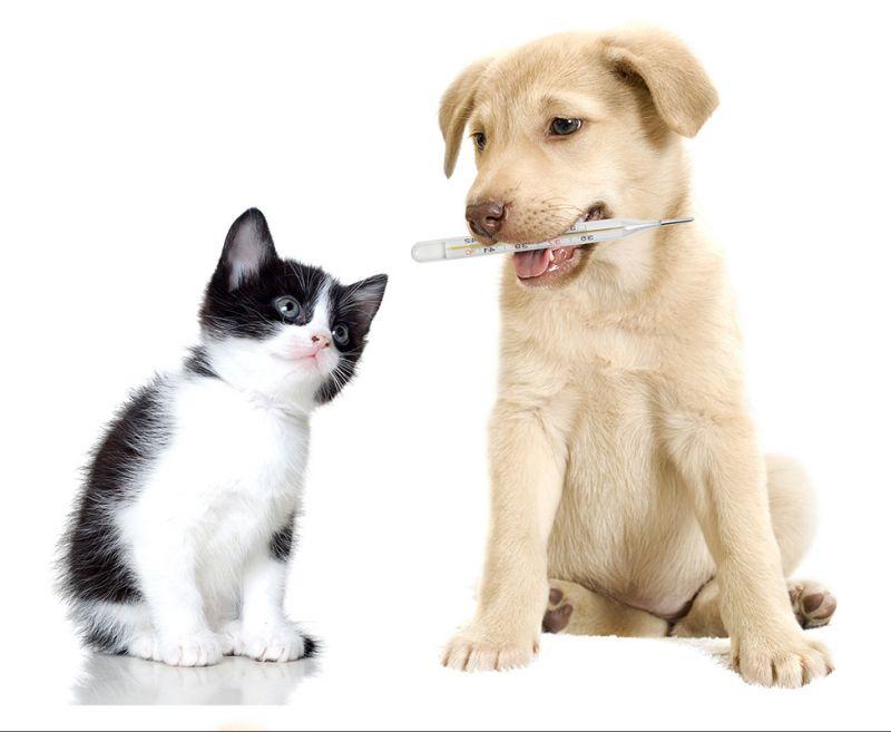 diabete-cane-gatto-4zampe-rubrica-animali-malattia