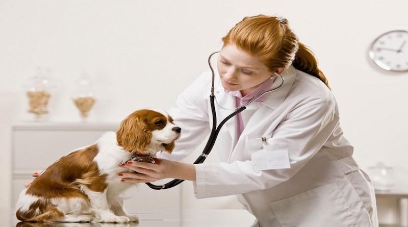 Tại sao nên học trung cấp thú y