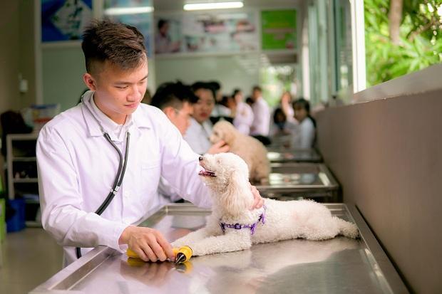 Học văn bằng 2 ngành bác sĩ thú y
