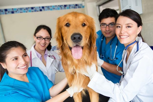 Tại sao nên theo học ngành thú y